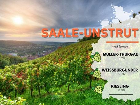 Wijngebieden Duitsland #11 Saale Unstrut