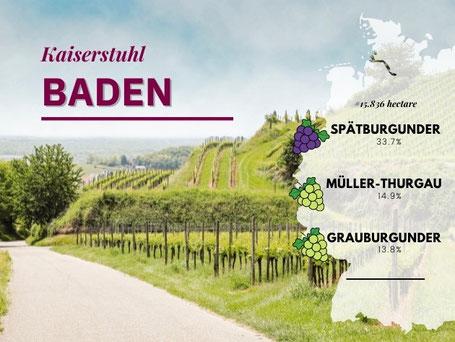 Wijngebieden Duitsland #2 Baden