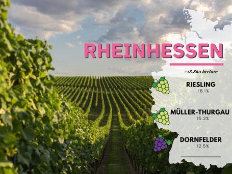 Wijngebieden Duitsland #10 Rheinhessen