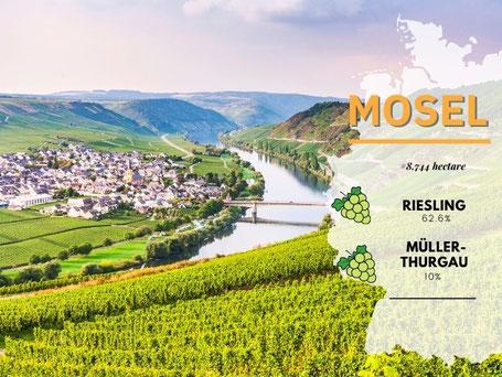 Wijngebieden Duitsland #6 Moezel