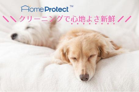 ホームプロテクト(TM)では、安心安全な洗剤を使用していますので、赤ちゃんが椅子を舐めて大丈夫です。