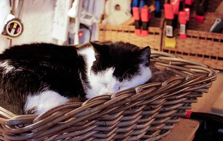 Katt på salmaker verksted