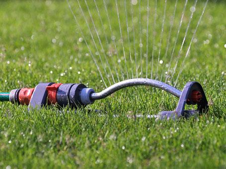 Rollrasen wie viel gießen, Tipps zum Wässern nach dem Verlegen