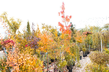 Bäume und Sträucher kaufen in Unterfranken