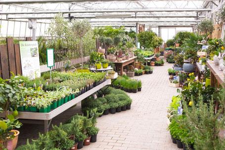 frische Kräuter und Gemüse Pflanzen kaufen in Würzburg