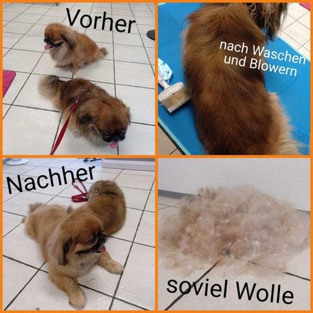 Wie Oft Sollten Vierbeiner Zum Friseur Hundefriseur Feldbach