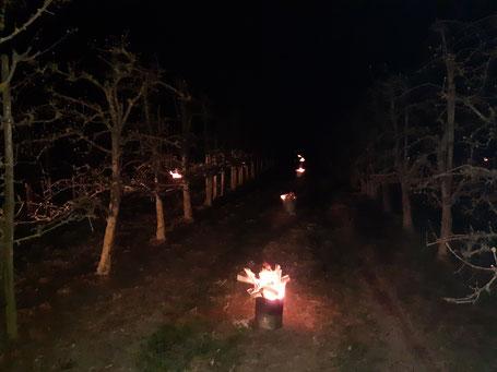 Frostschutz, Feuer, Heizen, Williams Christ Birnen