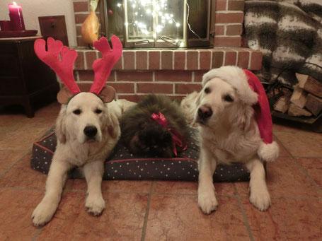 Aicha, Marnie und Pippa