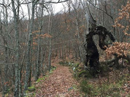 Bienvenue dans la forêt