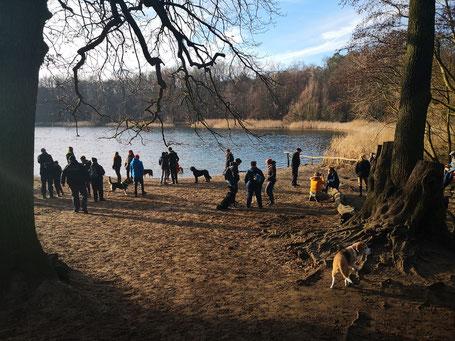 Reunión de perros y sus dueños en un pequeño bosque a las orillas de Berlín.