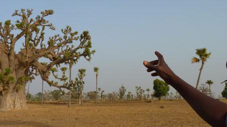 Sine Saloum, Sénégal