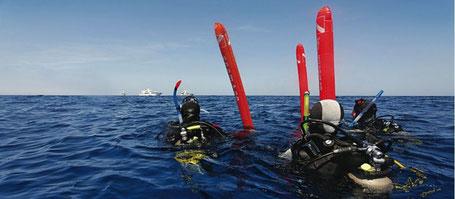 Galapagos Shark Diving - Taucher an Wasseroberfläche
