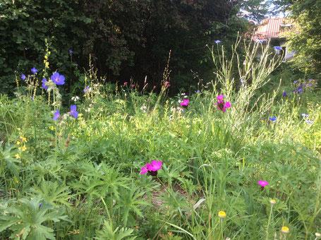 Naturnaher Garten (Johanna Riplinger)