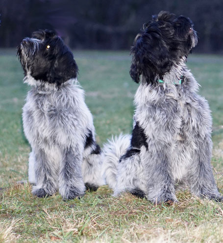 Celes Royal (links) und Camillo (rechts) vom Herthasee
