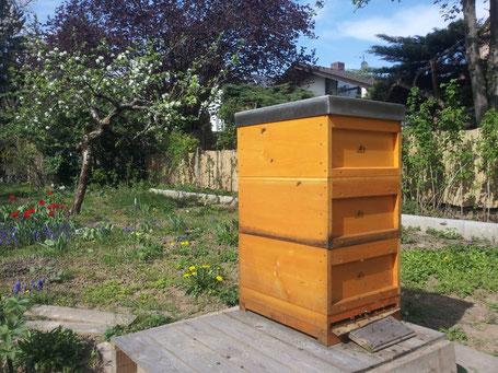 Erster Honigraum über Absperrgitter.