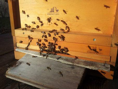 Bienenflug zur Weihnachtszeit