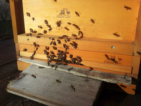 Bienenflug zur Weihnachtszeit.