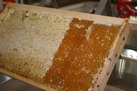 Honigwabe auf dem Entdeckelungstisch.