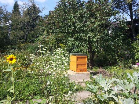 Bienenvolk im blühenden Garten.