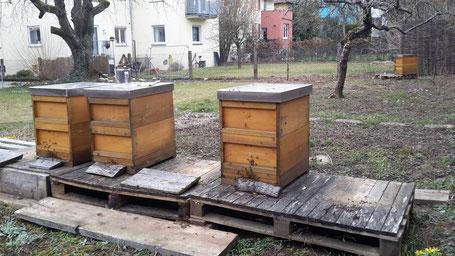 4 verbleibende Bienenvölker