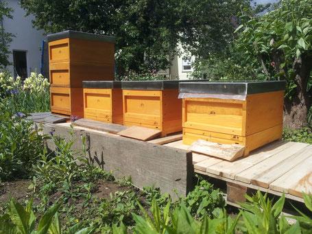 Bienenbeuten