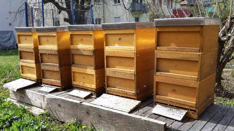 Erste Honigräume sind aufgesetzt
