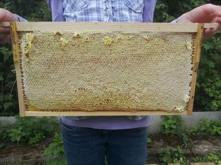 Verdeckelte Honigwabe
