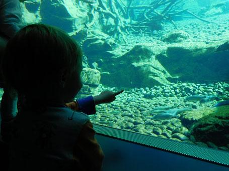 Das große Aquarium im Alpenzoo Innsbruck
