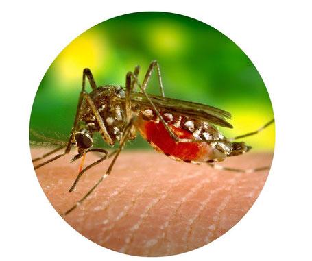 De eerste muggen zijn gespot
