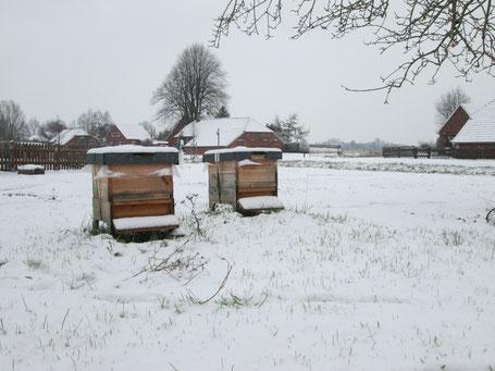 Ableger im Schnee: Ist der erste Frost über die Völker gegangen, sind sie spätestens drei Wochen später aus der Brut.