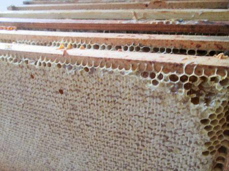 Überschüssiges Futter muss im Frühjahr entnommen werden, damit es nicht bei der Erweiterung des Brutnestes in den Honigraum umgetragen wird!