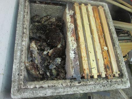 Alte Waben zum Einschmelzen überm Absperrgitter in zweiter Zarge: Darunter steht der abgedeckte Wasserkocher.