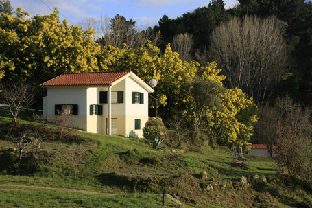 Casa Retiro met bloeiende Mimosa in februari