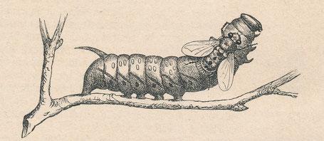 Illustration aus Landois' Buch ,Thierstimmen'