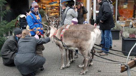 Tiere für Veranstaltungen buchen