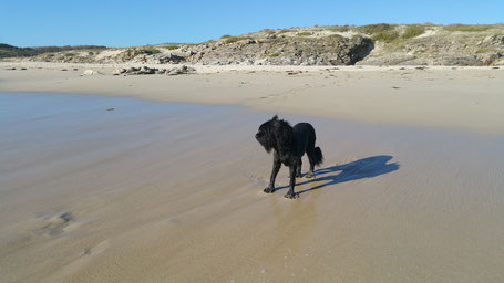 hunde-am-strand-bretagne-erlaubt