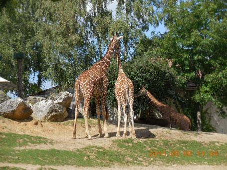 chambres d'hôtes et gîte proche Zoo parc de Beauval
