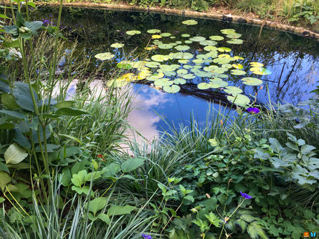 """Bassin - Photo prise dans le """"Jardin de la pie"""" au festival international des jardins de Chaumont sur Loire 2019"""