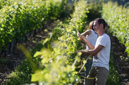 Domaine Vendange Vins de Savoie - travail de la vigne