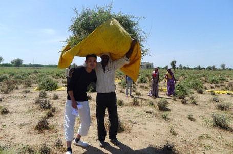 天然 ヘナ 自然 インド