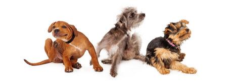 Anima-Balance | Tiertherapie | Allergie bei Hund, Pferd | Juckreiz | Hautausschläge | Hot Spot | Sommerekzem