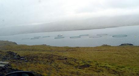 Elevages de saumon dans les fjords de l'est