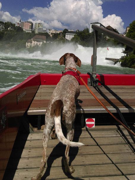 Kulturwanderung mit Hund bei ars canis