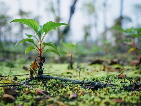 Bäume, Nachhaltigkeit. Es gibt nur eine Erde und wir müssen darauf aufpassen. Rücksicht zeigen