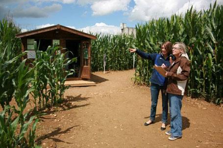 Labyrinthe de maïs Meuse Lorraine Montmédy