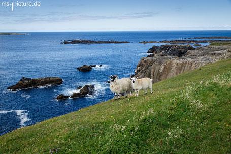 Schafe an den Klippen der Malin Bay