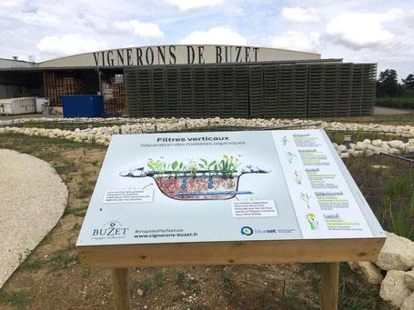 panneaux pédagogiques, illustration, vignerons de Buzet, éco épuration, illustrations, nature, biodiversité