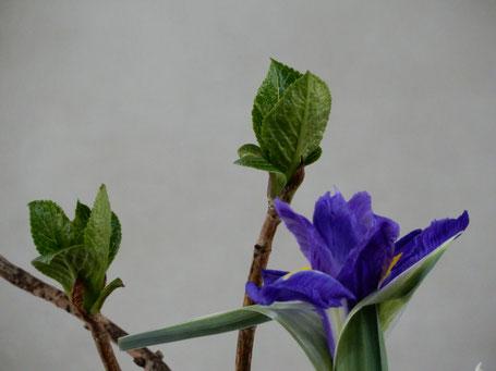 2020年3月29日 受難節 レント第5主日の講壇献花の一部部分をzoom