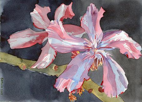oleander Kewpie