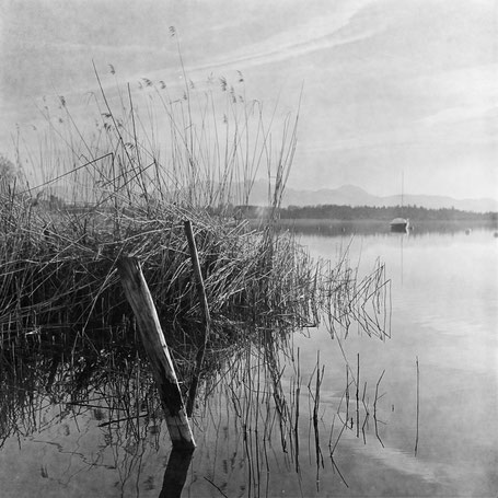 Schilf am Simssee (abfotografiert vom Negativ)